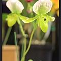 Orchid 09 (17).jpg