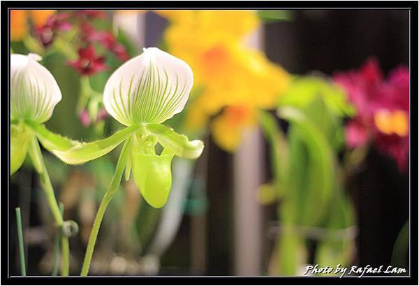 Orchid 09 (18).jpg