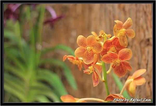 Orchid 09 (74).jpg