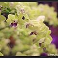 Orchid 09 (75).jpg