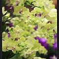 Orchid 09 (76).jpg