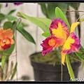Orchid 09 (12).jpg