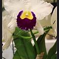 Orchid 09 (11).jpg