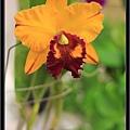 Orchid 09 (3).jpg
