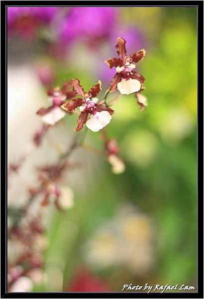Orchid 09 (77).jpg