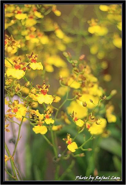 Orchid 09 (81).jpg