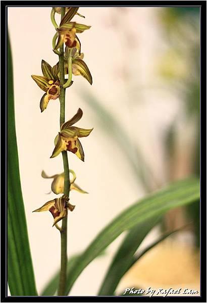 Orchid 09 (31).jpg