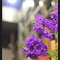 Orchid 09 (68).jpg