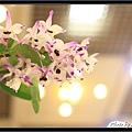 Orchid 09 (65).jpg