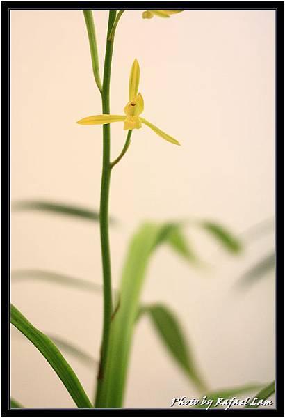 Orchid 09 (27).jpg