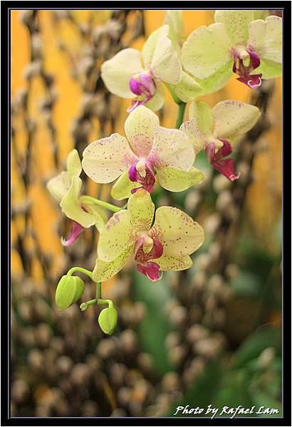 Orchid 09 (57).jpg