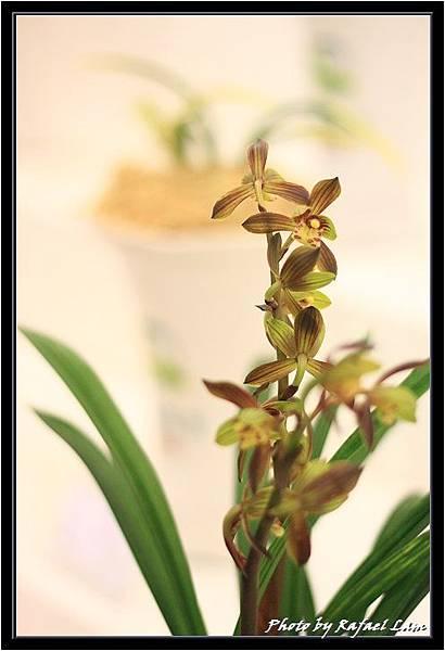 Orchid 09 (45).jpg