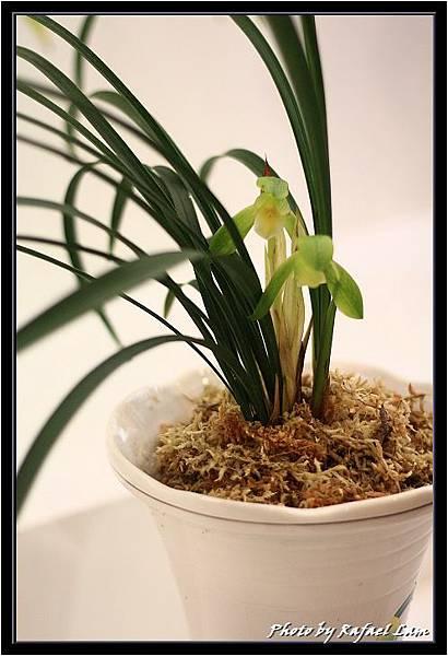 Orchid 09 (22).jpg