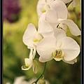Orchid 09 (54).jpg