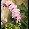 Orchid 09 (59).jpg