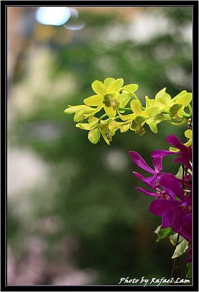 Orchid 09 (82).jpg