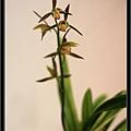 Orchid 09 (38).jpg