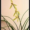 Orchid 09 (40).jpg