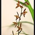 Orchid 09 (39).jpg