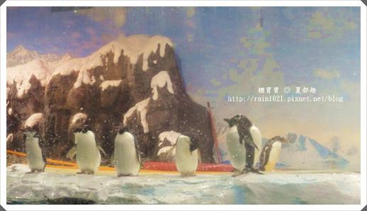 企鵝.bmp