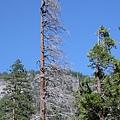 Yosemite9