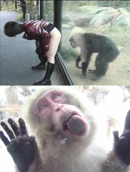 不要戲弄猴子