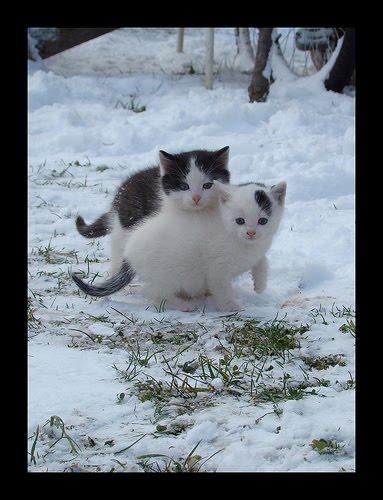 貓咪玩雪09.jpg