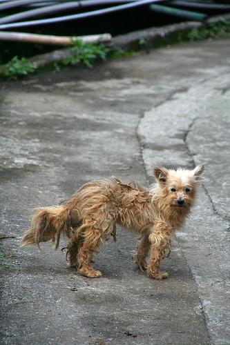 陽明山的雨狗