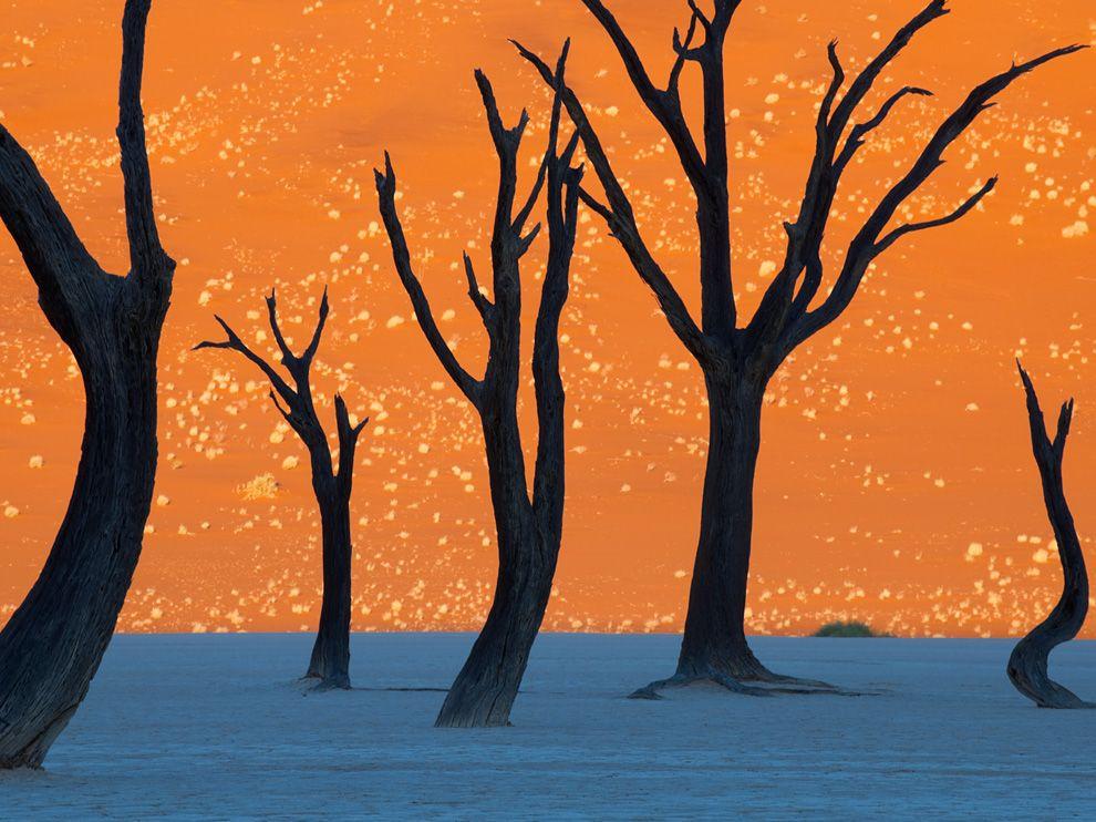 如畫般的納米比沙漠