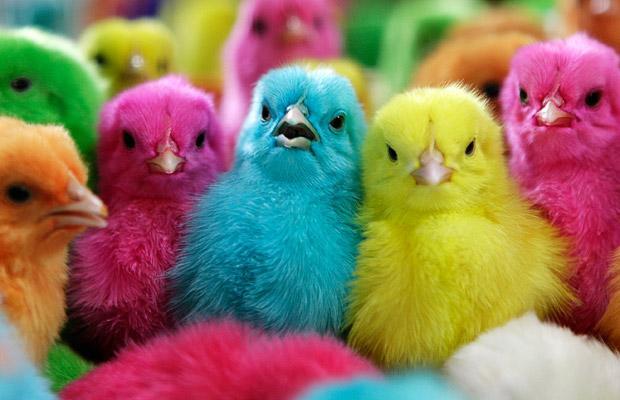 彩色小雞雞