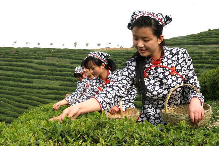中國茶姐09