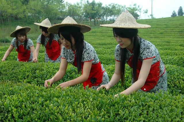 中國茶姐07