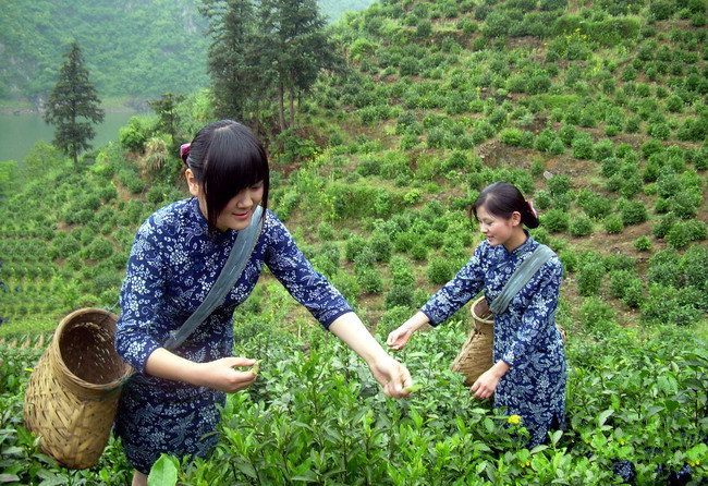 中國茶姐05