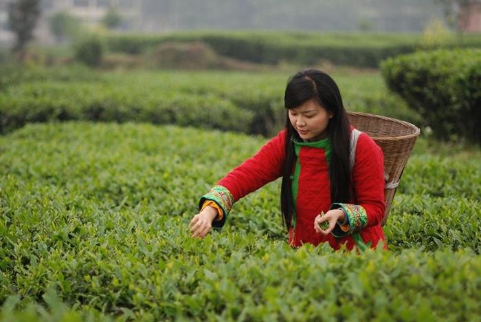 中國茶姐04