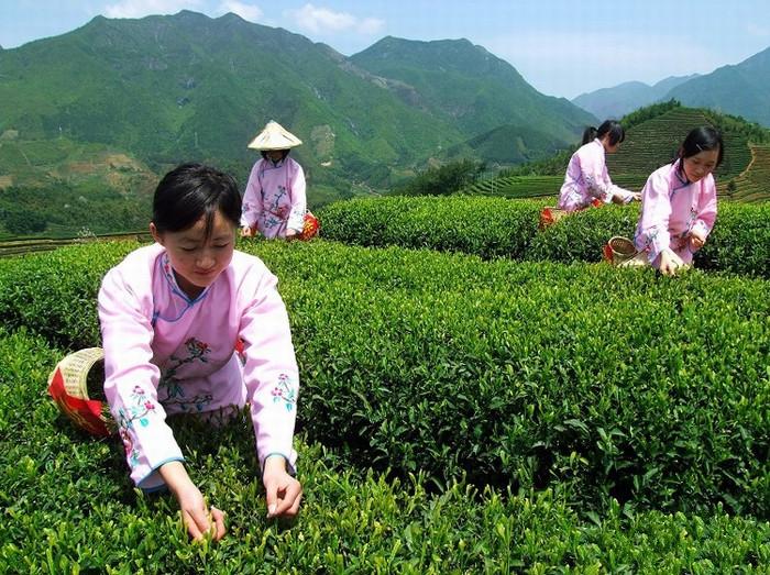 中國茶姐03