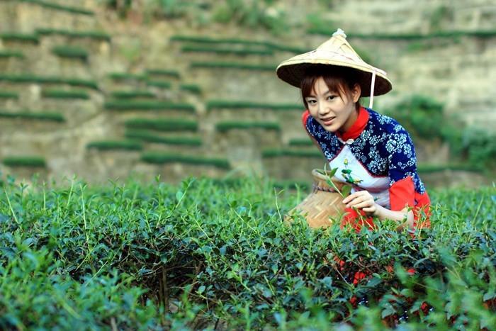 中國茶姐02