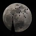超級月亮 18