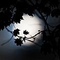 超級月亮 30