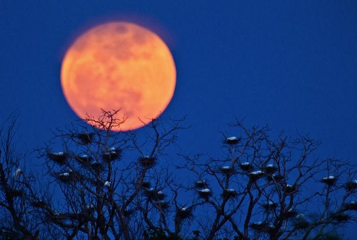 超級月亮 33