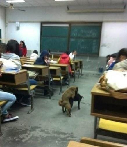 教室嘿咻無碼照