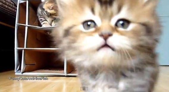 貓巢有巢氏