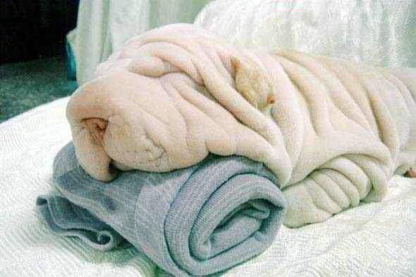雨狗 冬眠