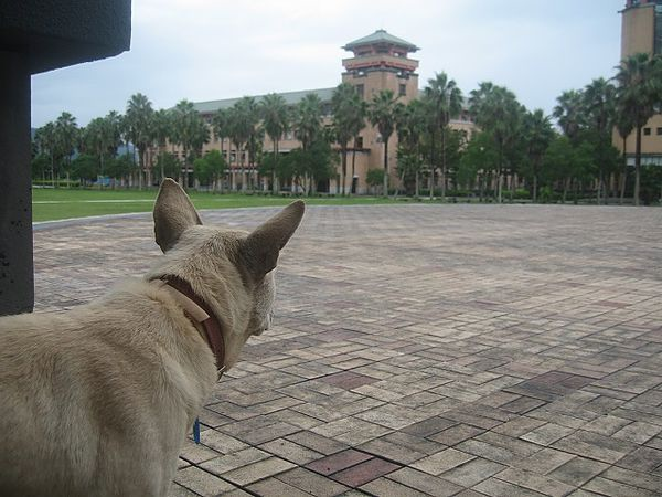 雨狗 東華大學