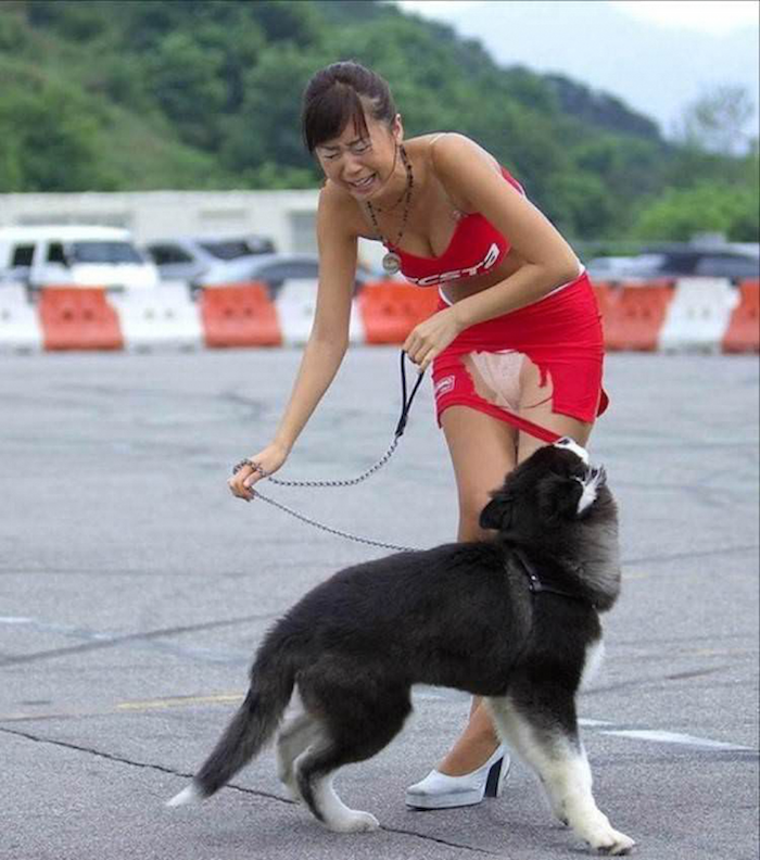 史上最囧狗主人