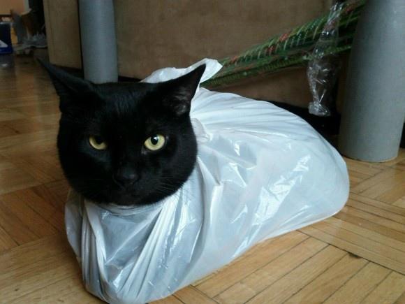 貓咪  塑膠袋