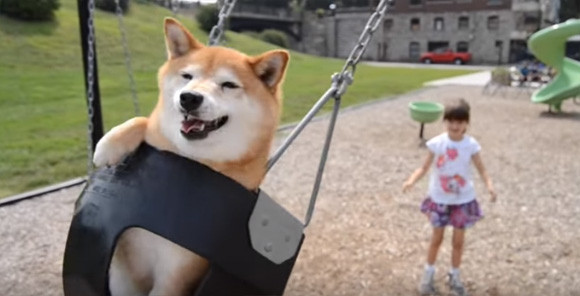 史上最陽光狗狗 Kitsu