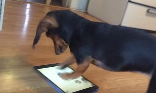 汪星人也愛玩 iPad