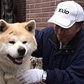 日本震災餘生的狗狗07.jpg