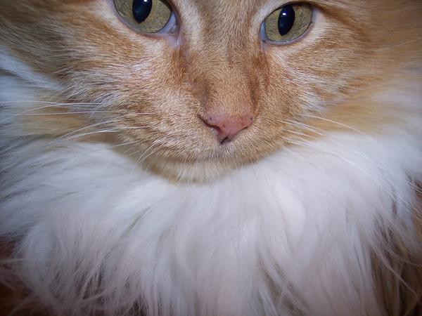 貓咪的鬍子