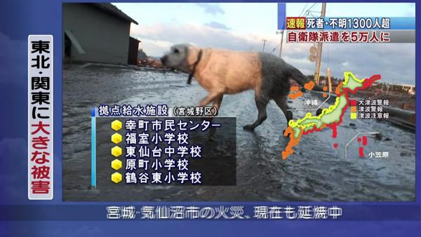 日本震災餘生的狗狗25.jpg